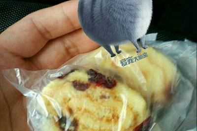 蔓越莓蜂蜜蛋糕卷